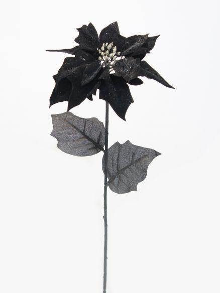 Euforbija grana