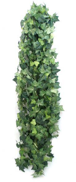 English ivy puzavac