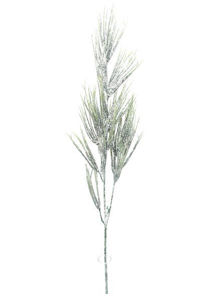 Bor grana snježna