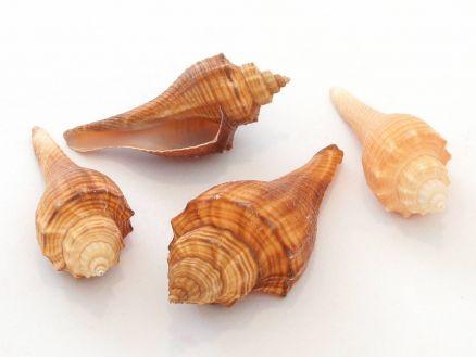 Školjke